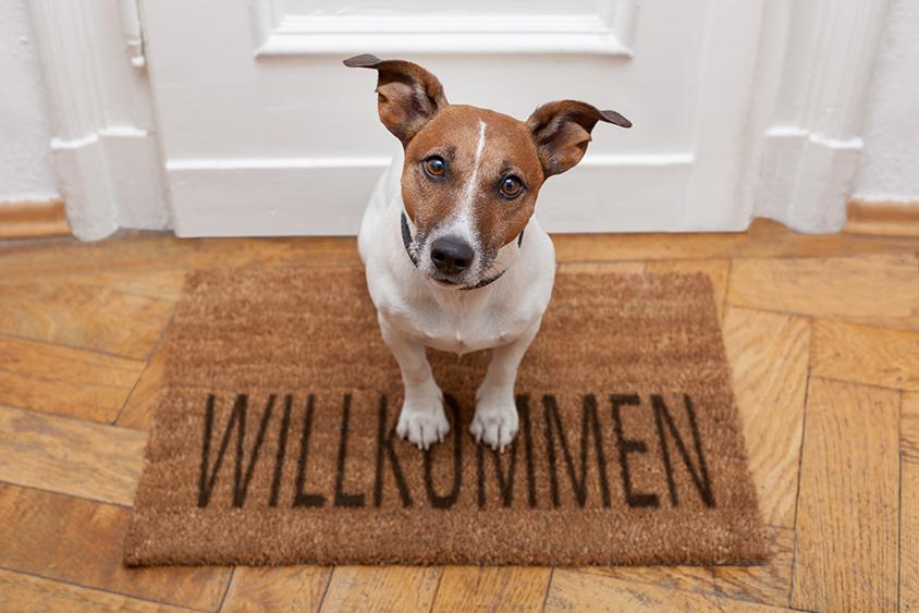 stressarme und gewohnt kompetente und professionelle tierärztliche Behandlung für Ihr Tier
