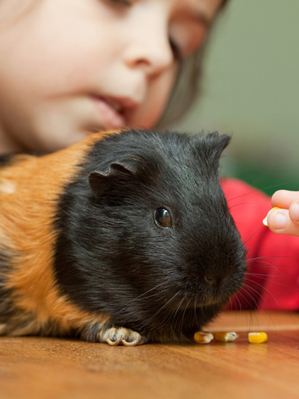 Tierärztin Jasper: ruhiger, artgerechter, schonender Umgang mit Tieren