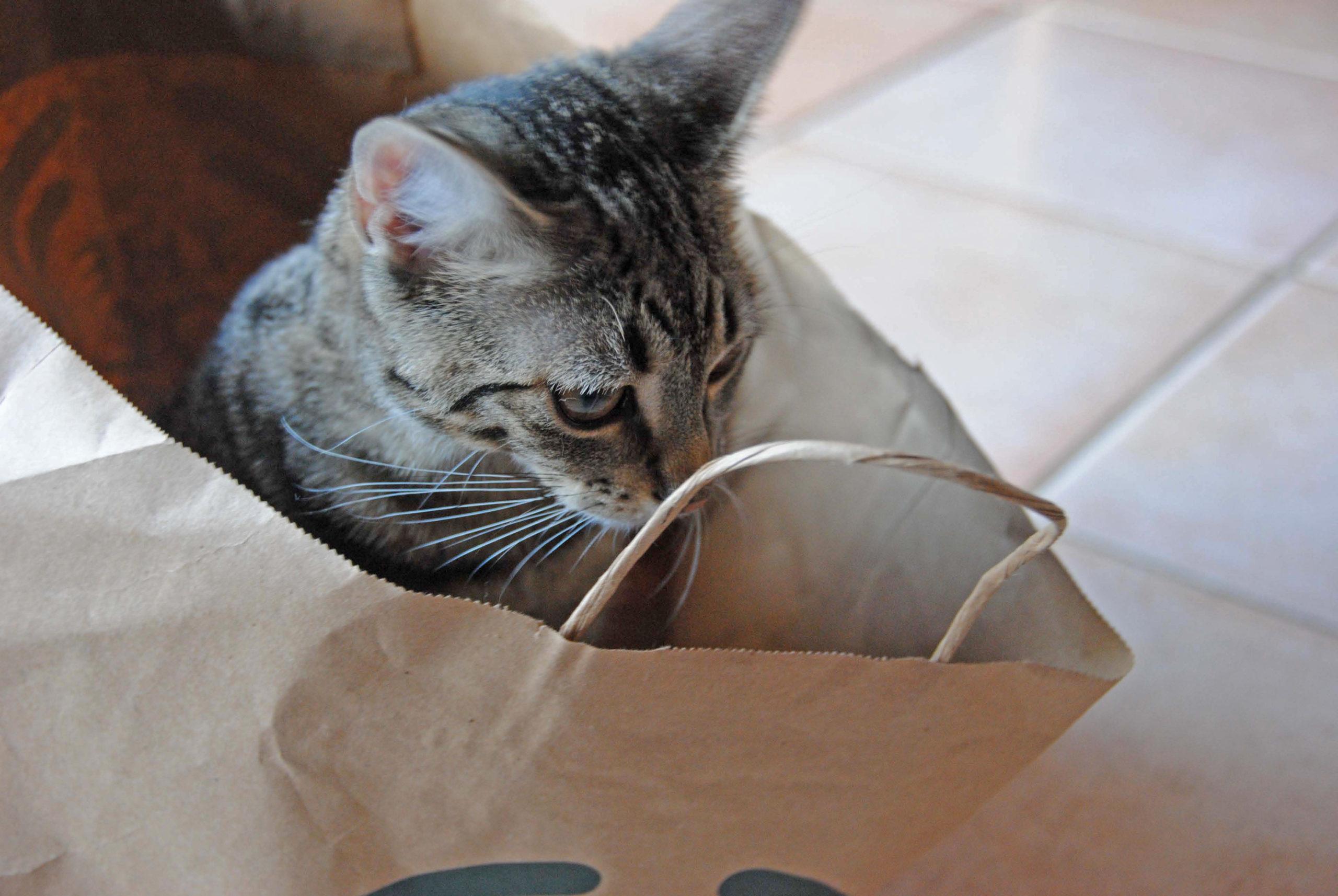 Behandlung von Kleintieren wie Hunde, Katzen, Kaninchen, andere Heimtiere